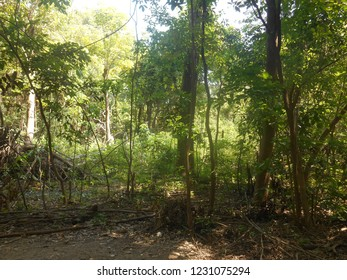 Excerpts of Amazonian Rainforest, in island on Negro River, Brazil