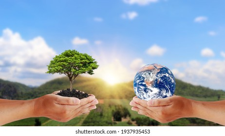 Exchange of planets in the hands of humans with young plants in the hands of humans, the concept of Earth Day and Conservation of the Environment. Elements of this image are decorated by NASA. - Shutterstock ID 1937935453