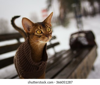 Excited abyssinian cat in winter clothes walking in winter park sitting on bench