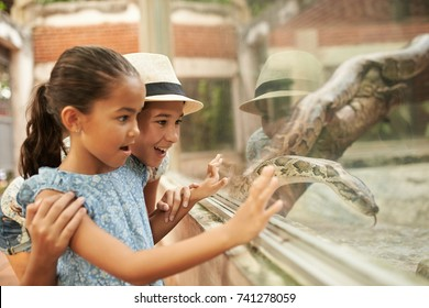 Excited children looking at snake in terrarium