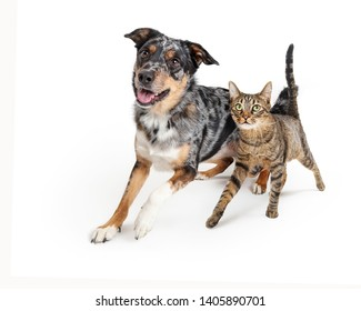 Excited dog and cat running together towards camera with happy expressions