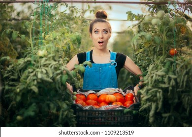 Excited Farmer Woman Holding a Crate Full of Organic Tomatoes. Excited agriculture worker holding a box o fresh vegetables