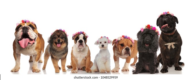 excited group of dog friends wearing flowers crowns on a white background