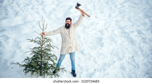 Excited lumberjack bears fir tree in the white snow background. Funny Santa man posing with axe and Christmas tree. Young man lumberjack is cutting Christmas tree in the wood