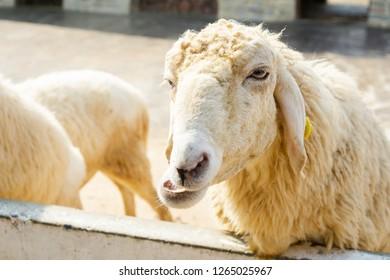 Exciting sheep farm