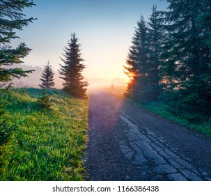 Exciting summer sunrise in Durmitor Nacionalni Park with old country road. Fabulous foggy view of Montenegro countryside, Zabljak town location. Beautiful world of Mediterranean countries.
