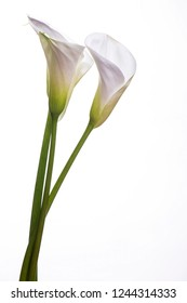 Exellent white bouquet with callas flowers on a white background, place for text.