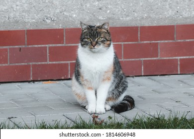 Exemplary posture of a domestic cat. Beautifully clenched abdominal muscles, head in body extensions and legs together. Sample feline seat. Kitten with a colored fur coat and green eyes.