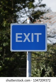 EXIT sign in blue