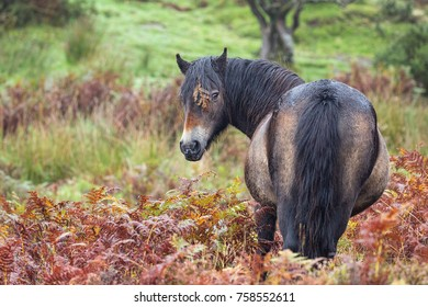 Exmoor pony with leaf on eye
