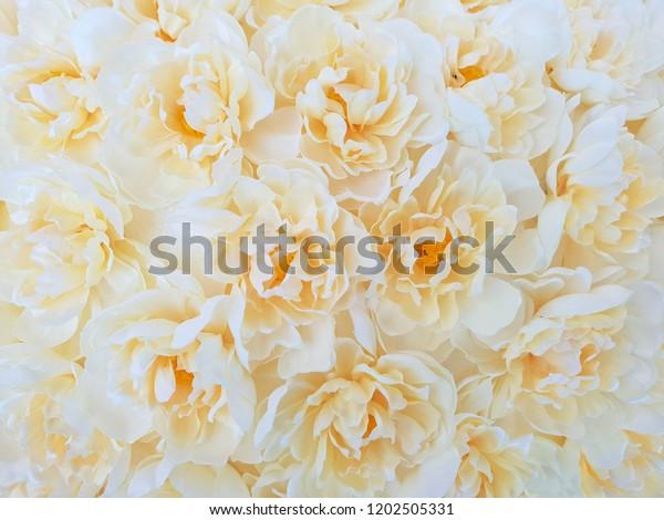 exotic beautiful background wallpaper soft 600w 1202505331