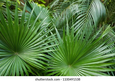 Exotic big leaves background photo. Concept of flora and plants.