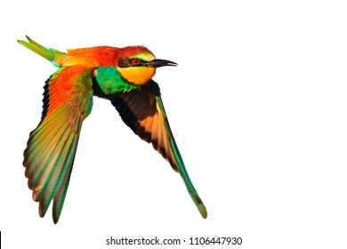 exotic bird in flight is isolated on a white background, natural beauty, design