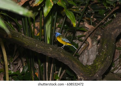 an exotic bird on a branch