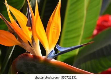 Exotic Bird of Paradise