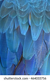 Exotic blue background of bird feathers, the fascinated Blue and Gold Macaw bird's wing texture