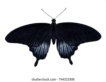 Exotic Butterfly isolated on a white background