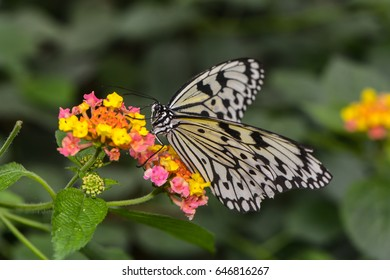an exotic butterfly on a blossom