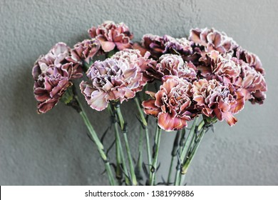 a exotic carnation( Black molly)