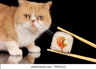 Exotic cat looking at piece of sushi, isolated on black background