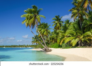 Exotic coast of the Dominican Republic with exotic palm trees on the golden sand, Caribbean Islands