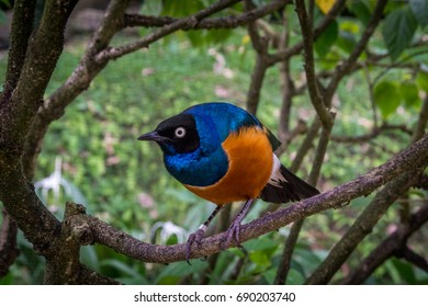A lot of exotic and colorful birds can be seen within the bird park in kuala lumpur