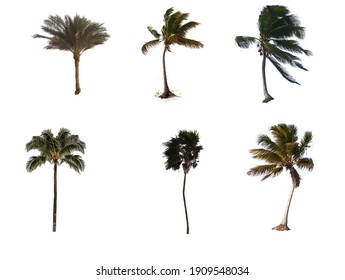 exotic desert palm plants in white background