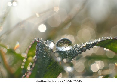 Exotic dew drops on grass. Nature abstrak.