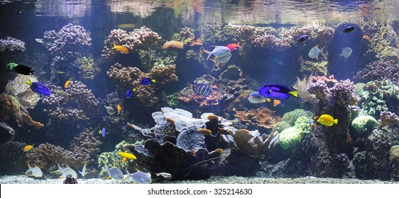 Exotic fish in big aquarium