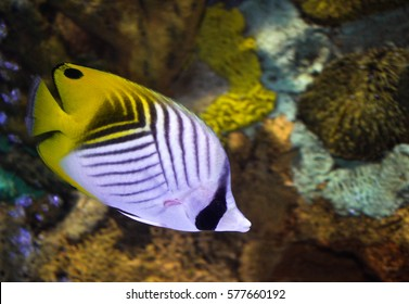 exotic fish swimming in a coral reef