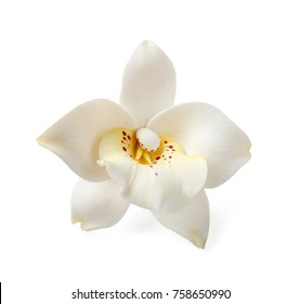 Exotic flower, isolated on white