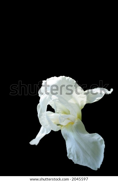 Exotic Flower Isolated over black background (clipping path included)