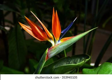 Exotic flower on the bush