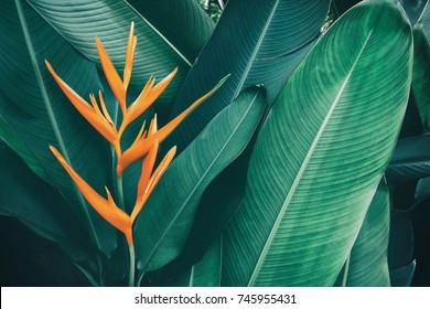 exotic flower, tropical foliage nature dark green background