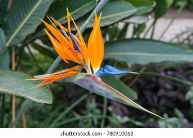 Exotic flowers in botanical garden