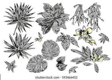 Exotic flowers set. Botanical  vintage illustration.