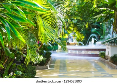 Exotic forest garden with palm leaves and fountain. Selective focus. Marbella, Andalusia, Spain