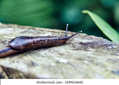 Exotic forest slug on the trunk