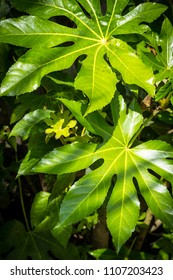 Exotic, green plants, natural background