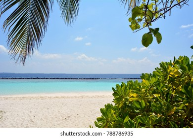 Exotic island with the Maldives with vegetation and clear blue water
