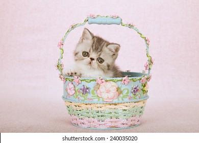 Exotic kitten sitting inside Spring floral decorated basket on light pink background