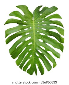 Unique Plant Leaves Images Stock Photos Vectors Shutterstock