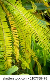 Exotic leaves, green fern background.