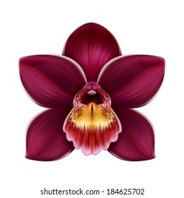 exotic orchid flower graphic illustration isolated on white background