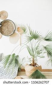 Exotic palm tree in room. Minimal apartment interior design.