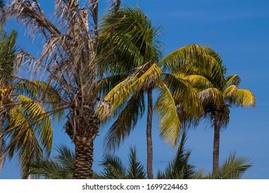 Exotic paradises of the beautiful summer in the coastline of eastern Venezuela