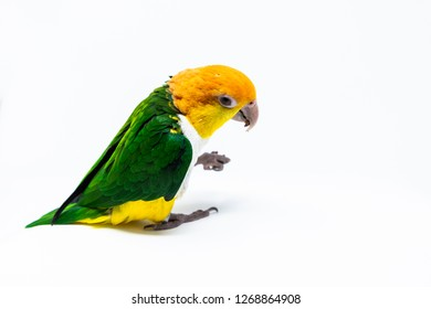 An exotic parrot is holding some nut with his leg