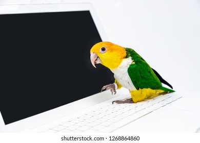 An exotic parrot is standing on the keyboard of a laptop