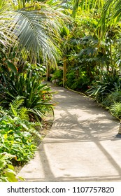Exotic plants, cactuses, succulents and others in the greenhouse