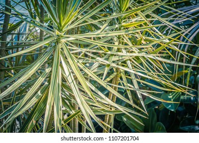 Exotic plants close up detailed pattern